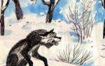 Волк — дурень