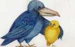 Про Воронушку — чёрную головушку и жёлтую птичку Канарейку